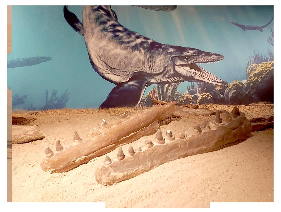 mosasaurus in Mergelrijk
